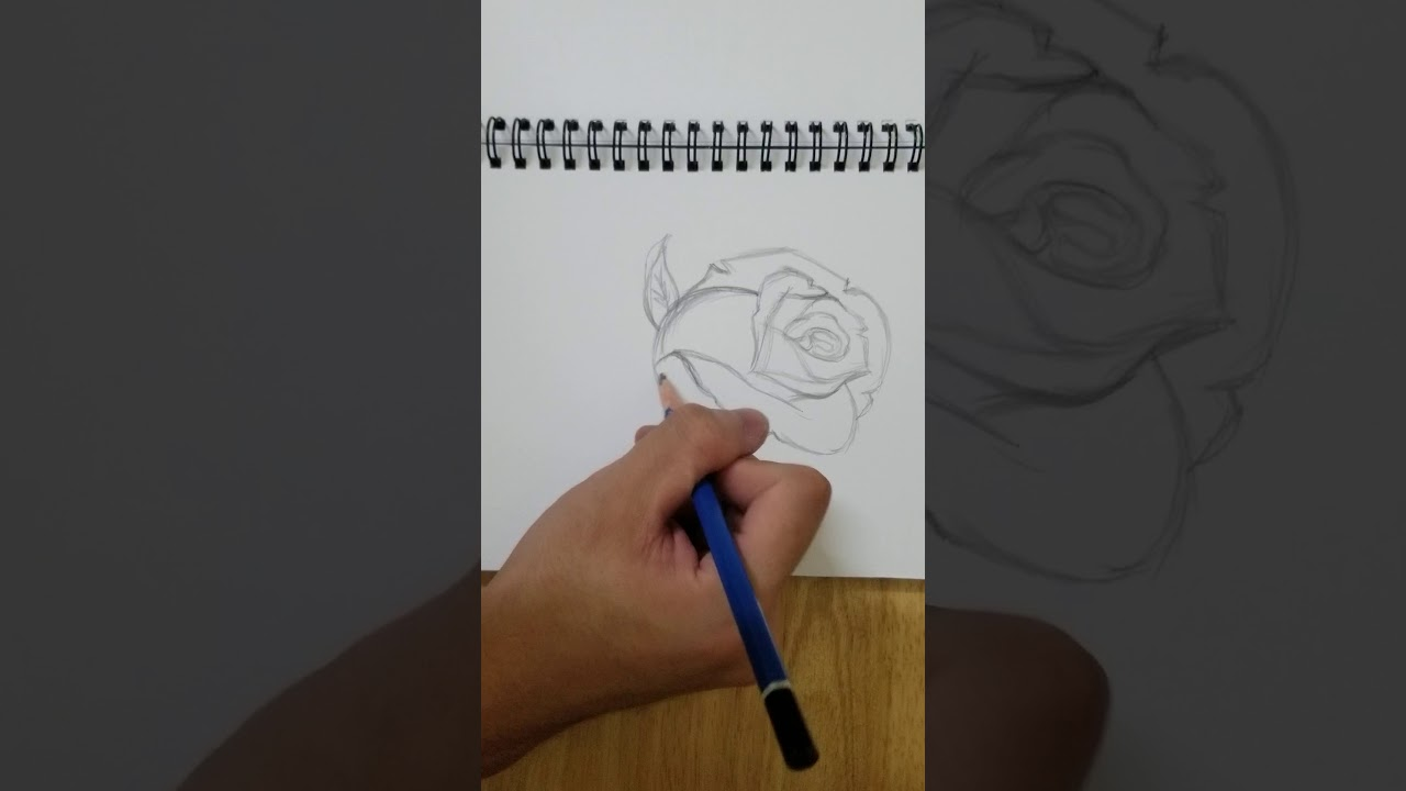 Hướng Dẫn Vẽ Hoa Hồng Cực Đơn Giản Bằng Bút Chì