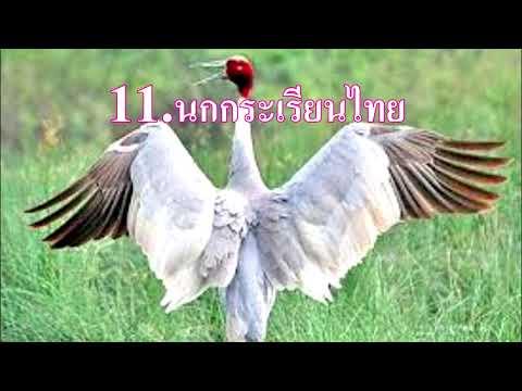 สัตว์สงวน 19 ชนิด ของไทย