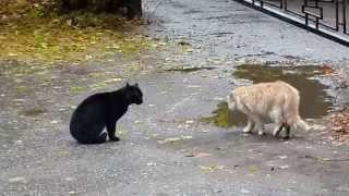 Черная кошка-Белый кот. Осень. Настроение. Black cat,  white cat.