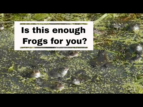 Is this enough frogs for you / National Frog Month / April