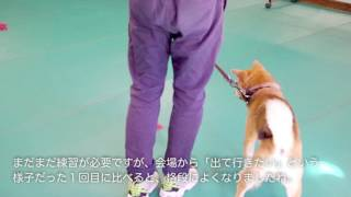 ファニマル応援犬の柴犬らいが人生初のしつけレッスンに挑戦! スタディ...