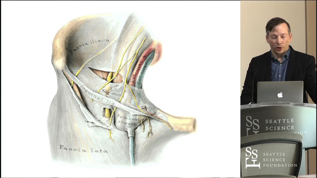 Anatomy of the Lumbar Plexus - R. Shane Tubbs, PhD , PA-C - YouTube