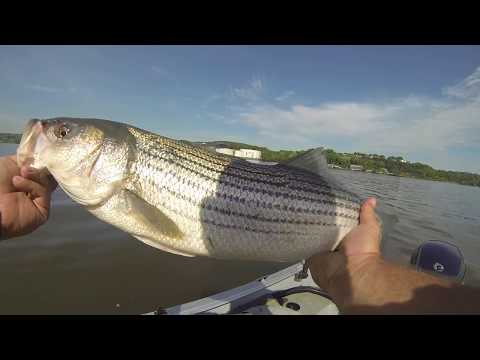 How To Fish For Striped Bass In The Hudson River In Newburgh New York