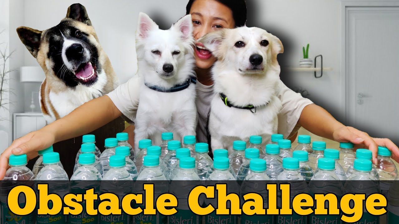 The OBSTACLE CHALLENGE  - Riobaby, Akita and Kulotobaby