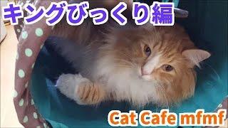 風邪のせいで猫納めも 猫はじめもまだできていないみほです。。。 早く...