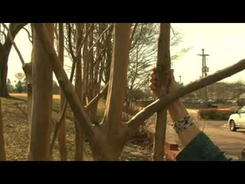 How to Prune Crape Myrtles - MSU Extension Service