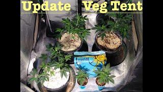 My Organic Garden-Update on Veg Tent