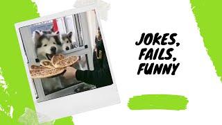 Funny fails about animals, people and all that / Смешные фейлы про животных , людей и все такое