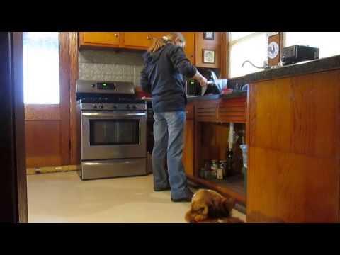 Soulful Singing Pembroke Welsh Corgi Dog - HarleysGotSoul