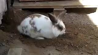 rabbit digs hole for cat - 1003155