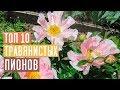 ПИОНЫ 🌺 Обзор 10 лучших сортов для посадки в саду / Садовый гид