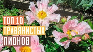 Gambar cover ПИОНЫ 🌺 Обзор 10 лучших сортов для посадки в саду / Садовый гид
