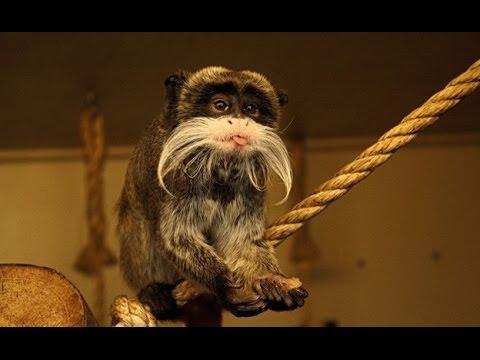 Blackpool Zoo Primates Monkey Enclosure Walk Through