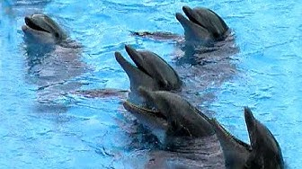 Teneriffa - Delphin Show - Loro Park