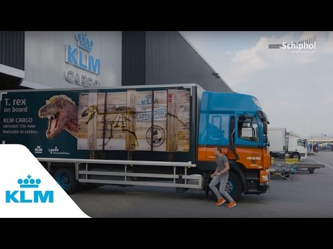 KLM Cargo vervoert Tyrannosaurus Rex naar Leiden