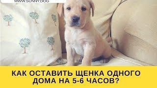Хочу щенка! Но как его оставить дома на 5 6 часов?