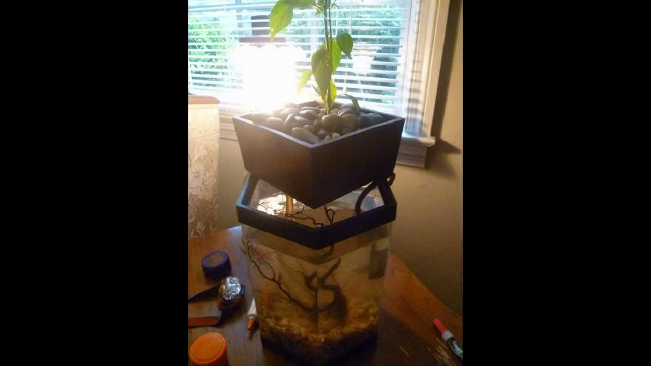 Self Cleaning Fish Tank Garden Great For Kids Turn A Fish Tank Into An Indoor Aquaponics Garden