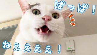 パパが来るとお喋りが加速する猫チロさん