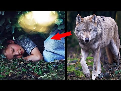 Wolf saved a boy who got lost in the forest
