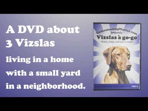 •· Watch Full Vizslas a go-go: Rosco, Daisy, and Lulu in motion vol. 1