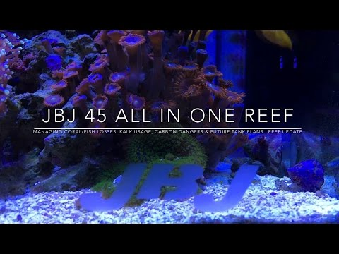 Managing Coral/Fish Loss, Kalk Usage, Carbon Dangers & Future Plans | Reef Update