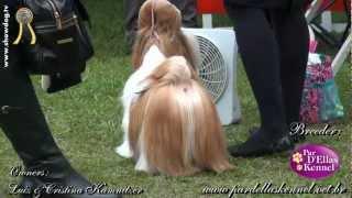 Show Dog Shih Tzu - Par D'ellas Fergie   Maya   Cbkc   Sabado   Maio 2012 Hd