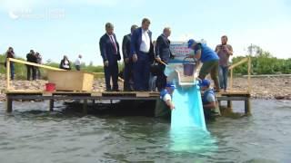 Путин выпустил в Байкал около 50 тысяч мальков омуля