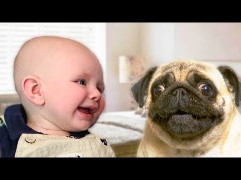 Pug Dog and Baby Compilation NEW