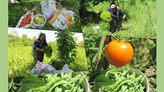 Bahçeden taze taze fasulye karpuz, biber, salatalık domates