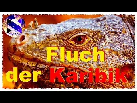 Fluch der Karibik ✅ Der Jäger ➤ Das Raubtier ✅ Doku neu 2017