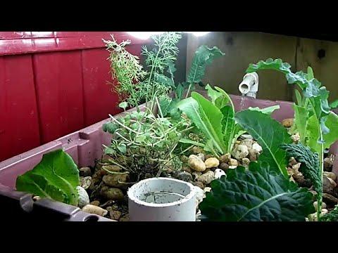 2nd Indoor Aquaponics System