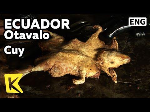 【k】ecuador-travel-otavalo[에콰도르-여행-오타발로]기니피그-튀김,-꾸이/cuy/fried-guinea-pig/restaurant/music/dance