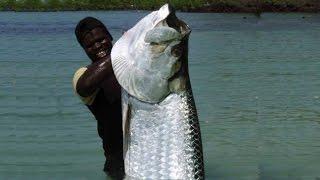 World's Biggest Tarpon Ever Caught