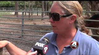 """Horse Rescue of South Florida"" takes 3 horses from Miami-Dade County"