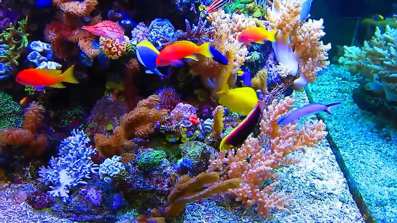 Best reef tank in rhe world youtube for Best fish for reef tank