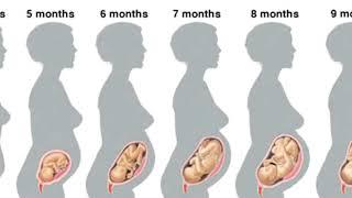 видео Срок беременности 27 недель — плод, вес, выделения, живот, шевеления, анализы, узи