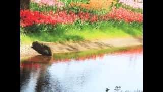 加藤登紀子に一年遅れて、1967年にこの曲でデビューした 森山良子は...