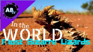 Most Bizarre Lizards in the World! 5 Weird Animal Facts - Ep. 11 : AnimalBytesTV