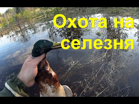 Охота на селезня/Открытие весна 2020/ 1 серия
