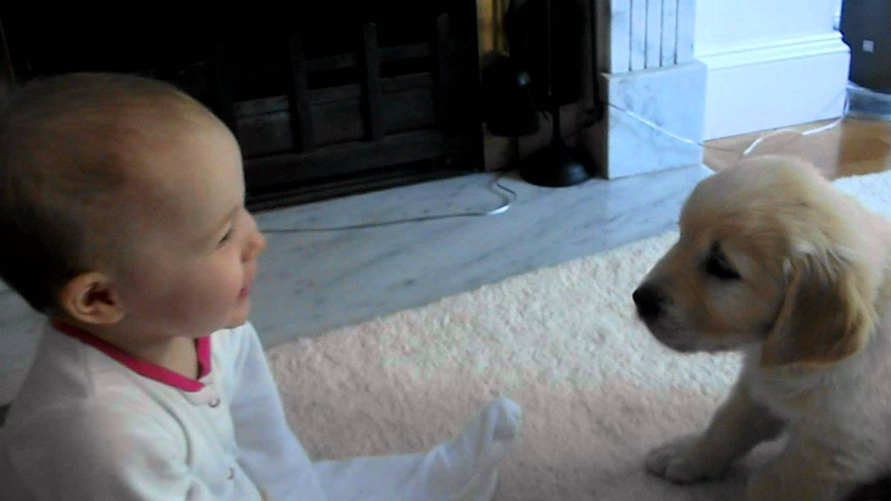 dog and baby meet for the first time