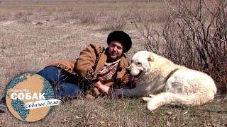 Казахский тобет. Планета собак  Моя Планета
