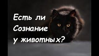 Есть ли сознание у животных? Сознание человека и животного. lee ченнелинг