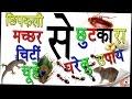 छिपकिली, मच्छर, चीटियों,चूहे, कॉकरोच,भगाने के घरेलू उपाय -||get rid of Insects-Hindi]