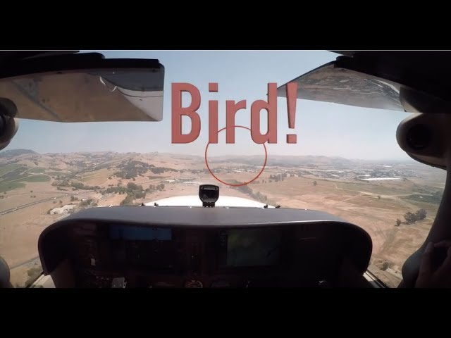 Bird Strike - Near Miss!