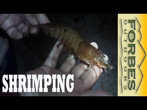 Monster Shrimp the Banana River Reds