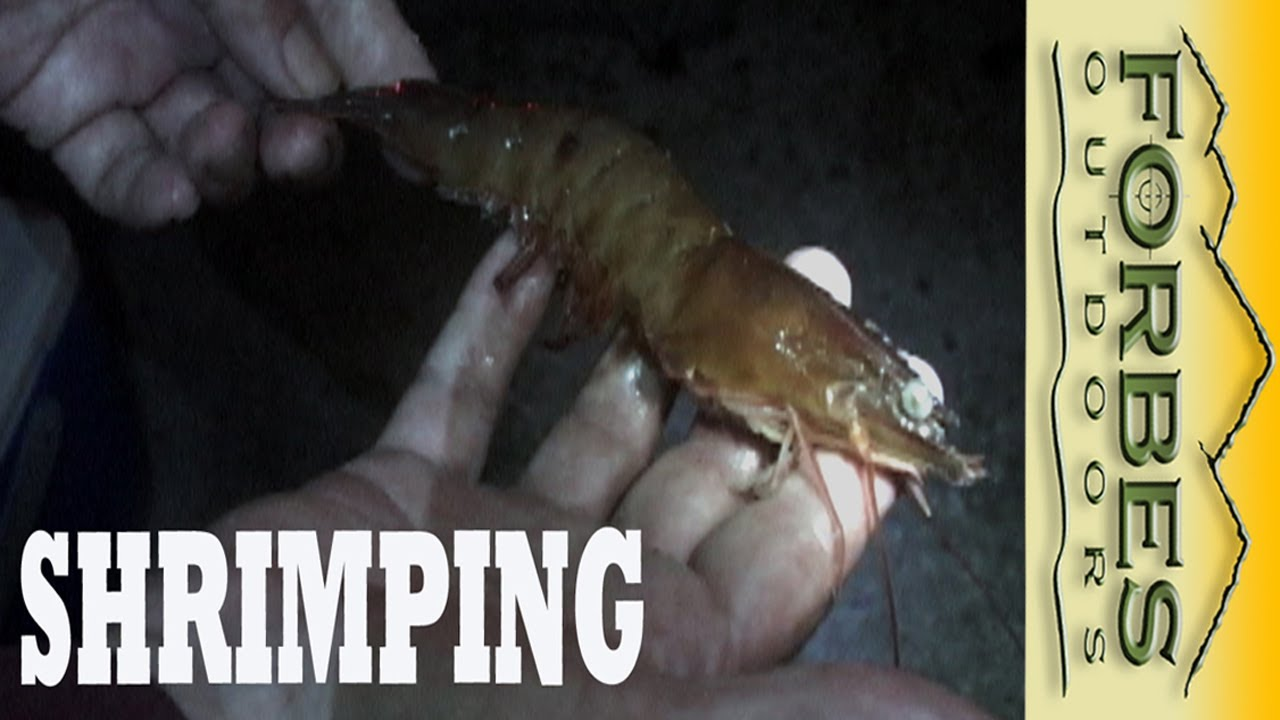Monster Shrimp the Banana River Reds