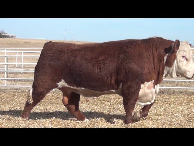 Express Ranches Lot 214