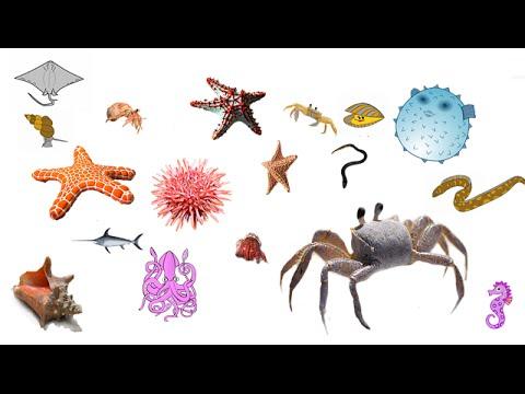 Los animales del fondo del mar para ni os youtube - Cosas para el jardin ...