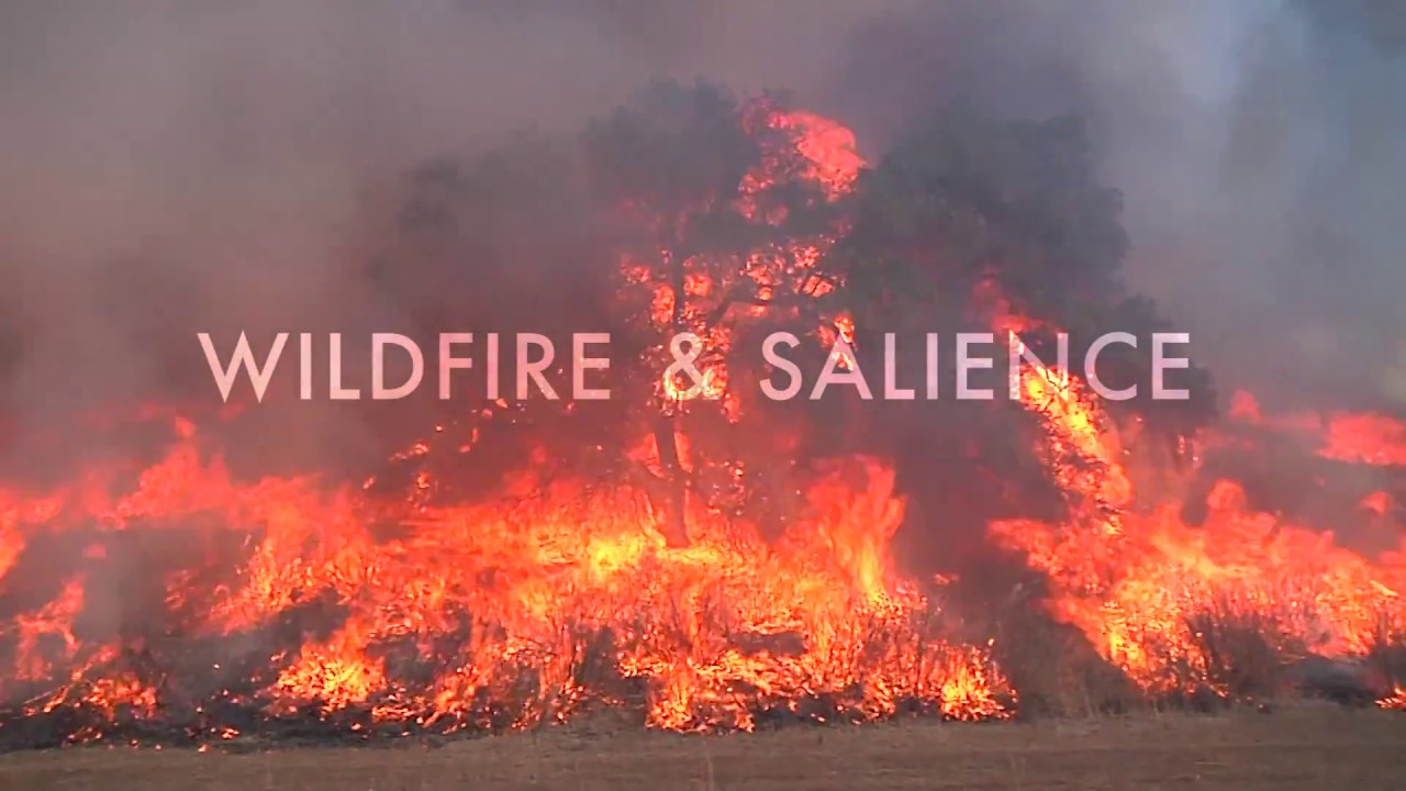 Wildfire & Salience