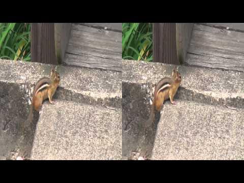Squirrel (3D)